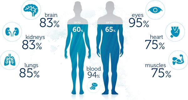 人間の身体の男性65%は水、女性は60%が水.jpg