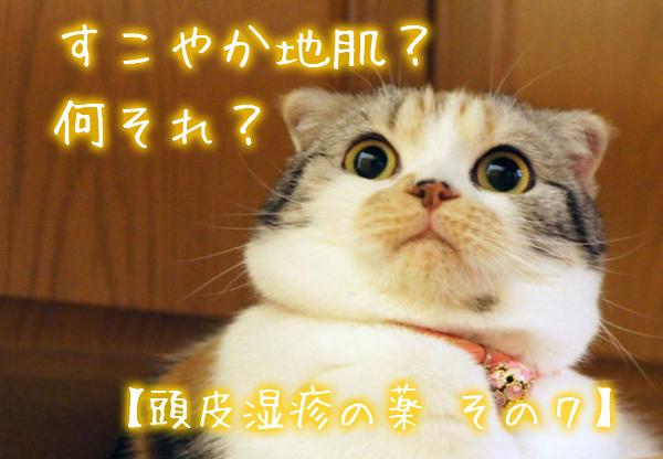 すこやか地肌? 何それ?【頭皮湿疹の薬 その7】.jpg