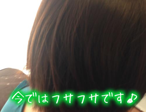 円形脱毛症から毛が生えたフサフサ.jpg