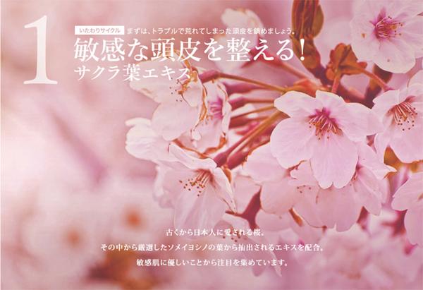 すこやか地肌の成分・サクラ葉エキス.jpg